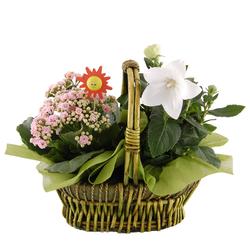 Koszyk kwiatów doniczkowych